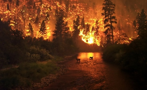 Deerfire_high_res_edit (640x395)