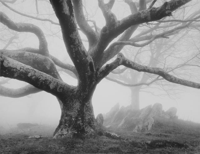 treefog